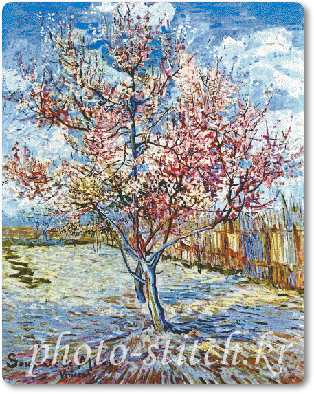 Peach Trees in Blossom 프리미엄